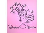36.Bistro Oignon(ビストロ オニョン)